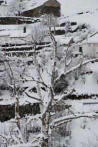 Árboles totalmente blancos